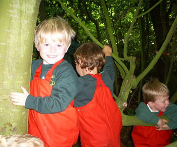 Forest School Kids in the trees